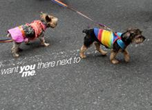 EWS-banner-dog_thumb